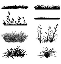set black grass silhouettes on white background vector image