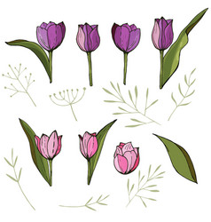 square frame with tulips and herbs on white vector image