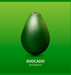 3d realistic whole avocado closeup isolated vector