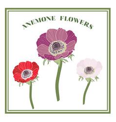 Anemone flowers vector