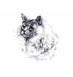black and white longhair cat ink hand drawn vector image