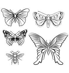 butterfly set floral wildlife tropical insect vector image