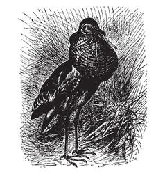Field hen vintage vector