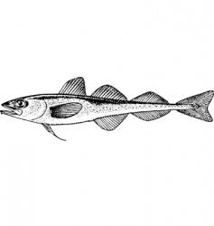 Fish boreogadus saida vector