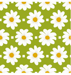 floral pattern daisy flowers seamless green vector image
