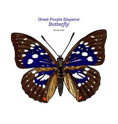 Great purple emperor sasakia charonda hand draw vector