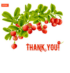 greeting card with a branch of lingonberry vector image