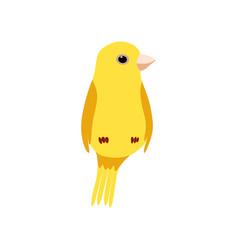 Little canary bird cute yellow budgie home pet vector