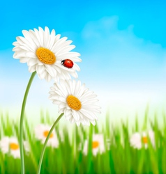 Nature spring daisy flower with ladybug vector image
