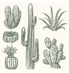 Hand drawn cactus vector image vector image