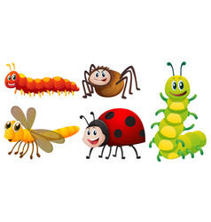 different types of bugs on white background vector image