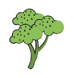 Drawing broccoli vegetable diet nutrition vector