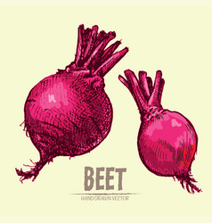 Digital detailed line art color beet vector