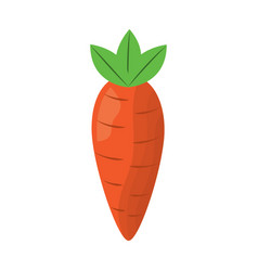 vegetable food carrot raw healthy vector image vector image