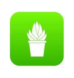 aloe vera plant icon digital green vector image