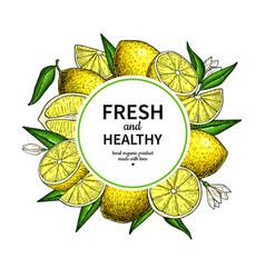 lemon frame drawing citrus fruit circle vector image