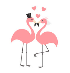 Two pink flamingo set wedding couple bride and vector