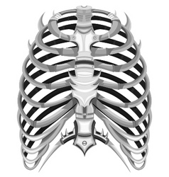 Ribs of steel vector