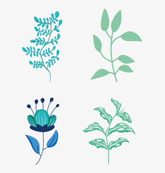 set nature flowers with petals and plant leaves vector image