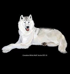 White wolf vector