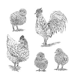 chicken rooster chick sketch set hand drawn vector image