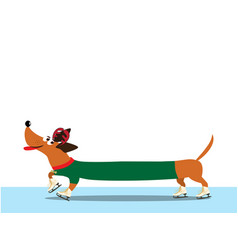 Dachshund dressed in green pullover skating along vector
