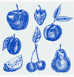 fruits blue hand drawn sketch on lined paper vector image
