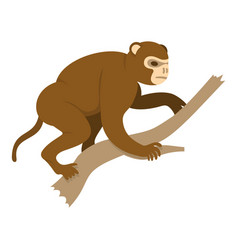 Monkey sitting on a branch icon isolated vector