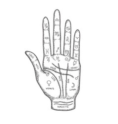 palm with image lines and signs vector image