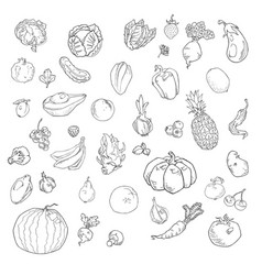 set of hand drawn fruits and vegetables vector image