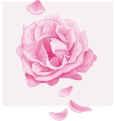 Delicate pink rose with falling petals vector image