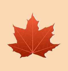 autumn single maple leaf orange color isolated on vector image