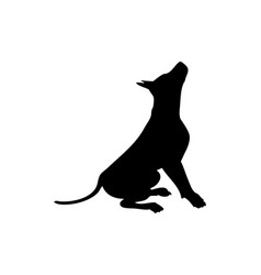 Black silhouette a sitting dog vector