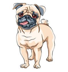 Cute dog pug breed vector