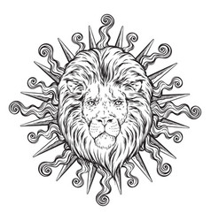 Hand drawn lion head in sun rays isolated vector