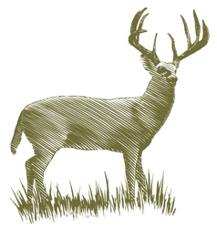 Woodcut Deer vector