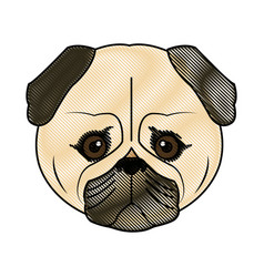 cute face dog pug pet aminal image vector image