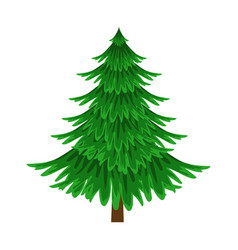 spruce evergreen tree element of a landscape vector image vector image