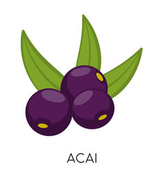 Black acai berry flat icon isolated on white vector
