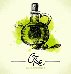 Hand drawn olive with watercolor back vector image