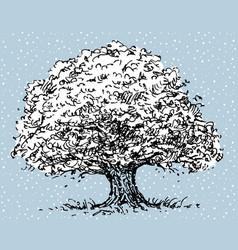 Old oak tree in winter vector