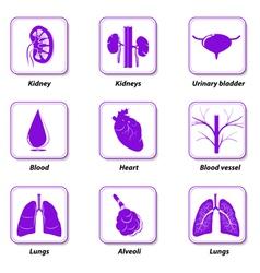 icons internal human organs vector image vector image