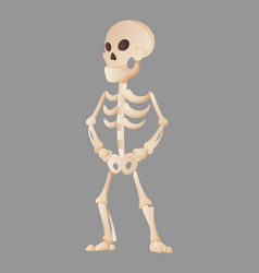 funny cartoon skeleton posing while standing vector image