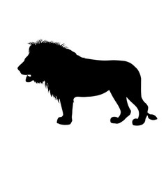 silhouette of african lion vector image