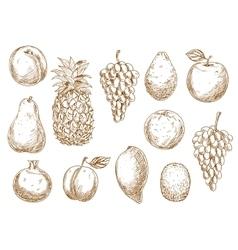 Sketch of fresh fruits for agriculture design vector