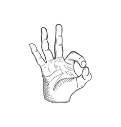 Sketch Ok Gesture vector image vector image