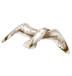 Engraving drawing flying gull vector