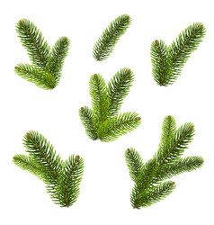 firtree isolated isolated background vector image