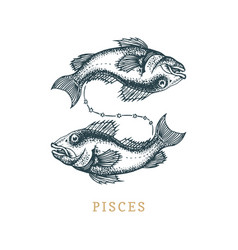 pisces zodiac symbol hand drawn in engraving vector image