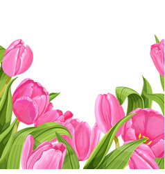 white background pink tulips horizontal vector image